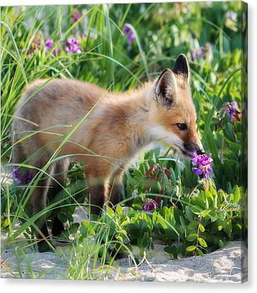 Stopping To Smell The Flowers Canvas Print by Bill Wakeley