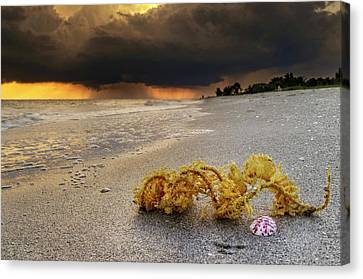 Storm And Sea Shell On Sanibel Canvas Print by Greg Mimbs