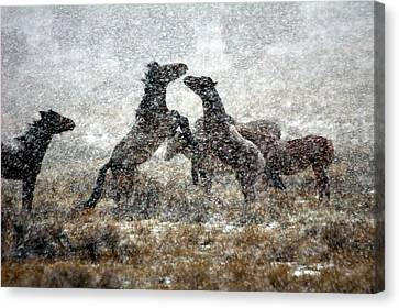 Storm Fight Canvas Print by Gene Praag
