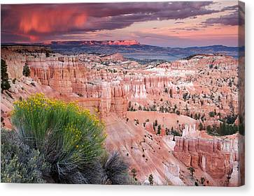 Storm Over Bryce Canyon Canvas Print