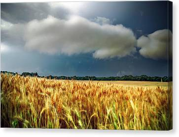 Storm Over Ripening Wheat Canvas Print by Eric Benjamin