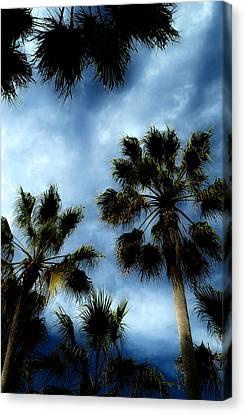 Stormy Palms 2 Canvas Print