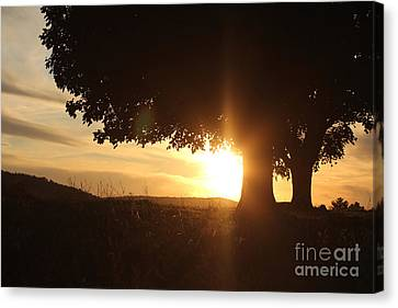Story In Nature Canvas Print by Everett Houser