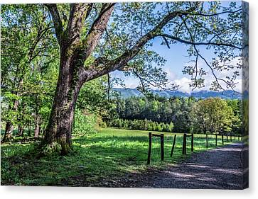 Story In The Smokies Canvas Print by Jon Glaser