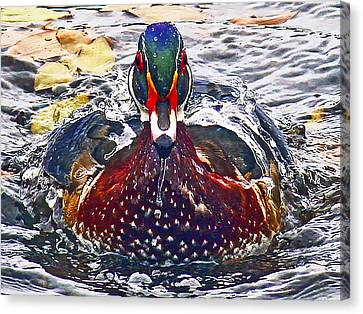 Straight Ahead Wood Duck Canvas Print by Jean Noren