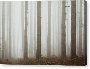 Early Spring Canvas Print - Straight And Tall by Chris Dale