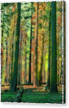 Straight And Tall Canvas Print by Michael Cleere