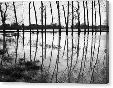Stranded Trees II Canvas Print by Hazy Apple