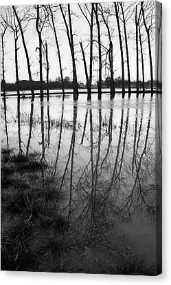 Stranded Trees Canvas Print by Hazy Apple