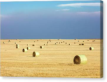Straw Bales Canvas Print