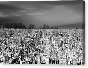 Straw Fields Canvas Print