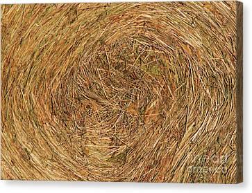 Straw Canvas Print by Michal Boubin