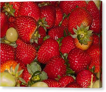 Strawberries 731 Canvas Print by Michael Fryd