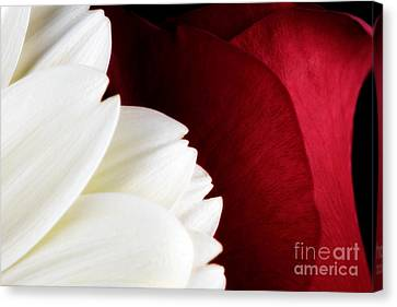 Strawberry And Cream Canvas Print by Mark Johnson