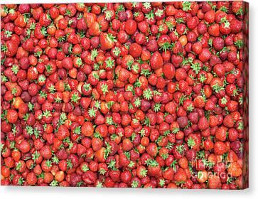 Strawberry Fest Canvas Print by Tim Gainey