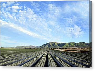 Strawberry Fields Forever 2 Canvas Print by Floyd Snyder