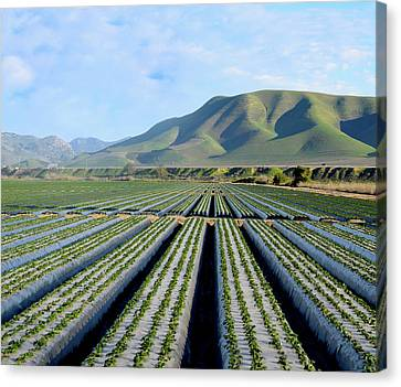 Strawberry Fields Forever Canvas Print by Floyd Snyder
