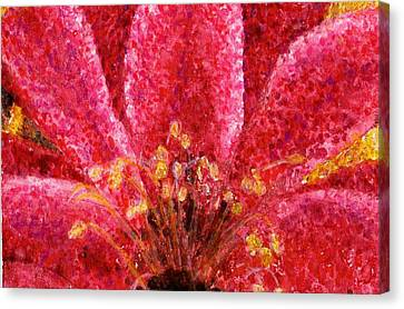 Strawberry Hedgehog Cactus Blossom Canvas Print by Cynthia Ann Swan