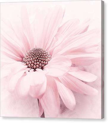 Canvas Print featuring the photograph Strawberry Ice by Darlene Kwiatkowski