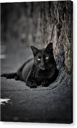 Stray Cat Canvas Print