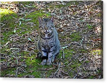Stray Cat Canvas Print by JW Hanley