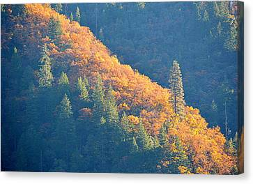 Canvas Print featuring the photograph Streak Of Gold by AJ Schibig