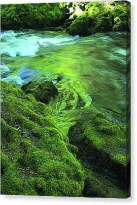 Stream Above Whitehorse Falls Canvas Print
