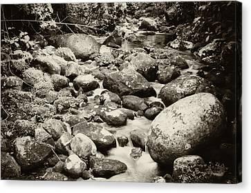Nature In Silent Canvas Print by Amarildo Correa