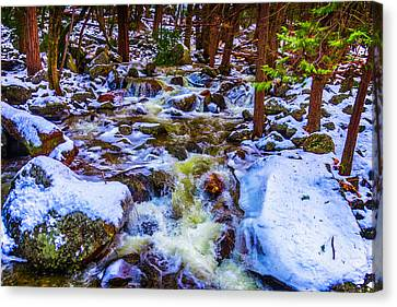 Stream In Snow Covered Woods Canvas Print
