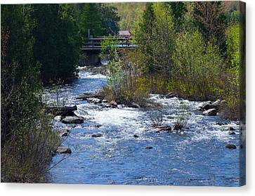 Stream In Spring Canvas Print