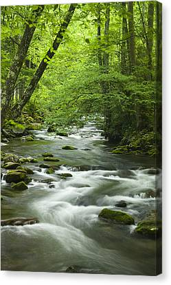 River Canvas Print - Stream In The Smokies by Andrew Soundarajan