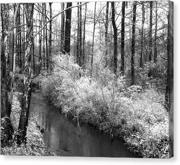 Stream In The Woods Canvas Print by Fred Baird