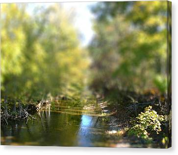 Stream Reflections Canvas Print by EricaMaxine  Price