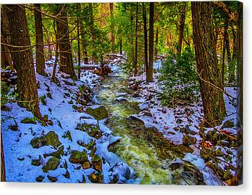 Stream Through Snowy Forest Canvas Print