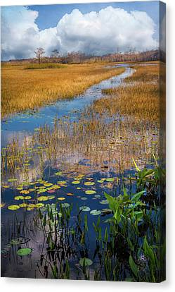 Canvas Print featuring the photograph Stream Through The Everglades by Debra and Dave Vanderlaan