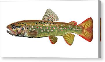 Stream Trout Canvas Print by Paul Vecsei