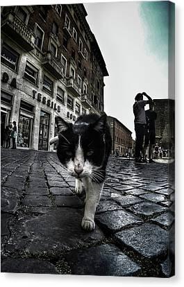 Street Cat Canvas Print by Nicklas Gustafsson