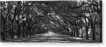Strength In Numbers Wormsloe Plantation Art Canvas Print by Reid Callaway