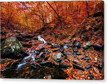 Canvas Print featuring the photograph Stress Relief by Edward Kreis