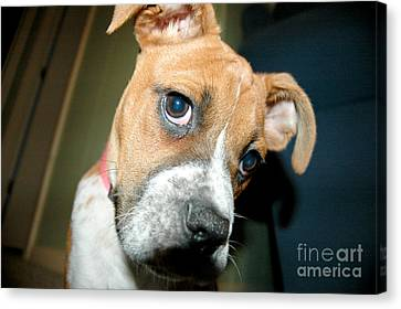 Strike A Pose Canvas Print by Maureen Norcross