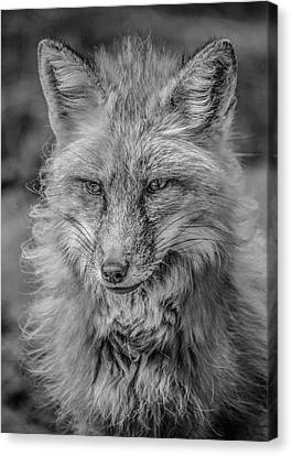 Striking A Pose Black And White Canvas Print