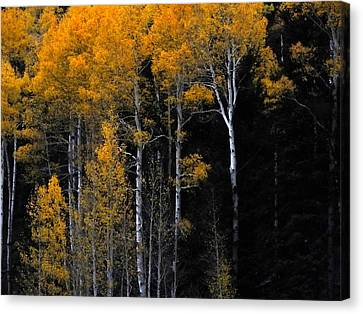 Striking Gold Canvas Print