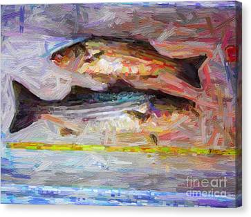 Striped Bass Keepers Canvas Print by Wingsdomain Art and Photography