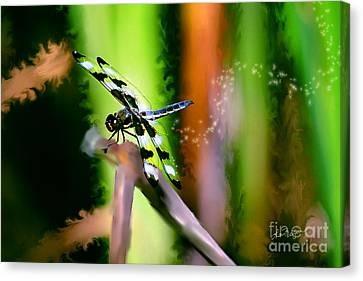 Striped Dragonfly Canvas Print