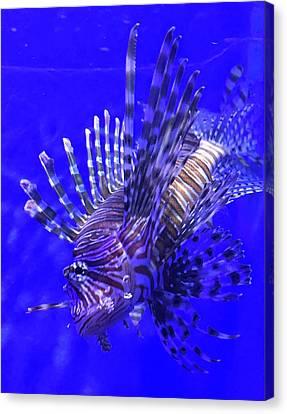 Striped Lionfish Canvas Print