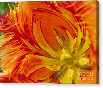 Striped Parrot Tulips. Olympic Flame Canvas Print by Ausra Huntington nee Paulauskaite