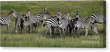 Stripes - Serengeti Plains Canvas Print by Craig Lovell
