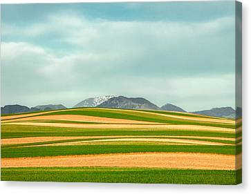 Stripes Of Crops Canvas Print by Todd Klassy