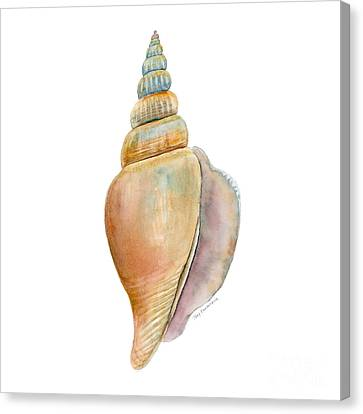 Seashell Canvas Print - Strombus Vittatus Shell by Amy Kirkpatrick