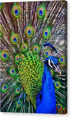 Strut Canvas Print by Angelina Vick